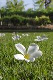 Flores nas gramas Imagem de Stock Royalty Free