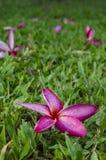 Flores nas gramas Imagem de Stock