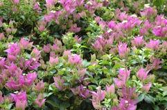 Flores nas horas de verão Fotografia de Stock