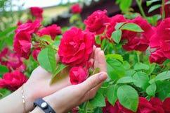 Flores nas mãos fotos de stock