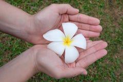 Flores nas mãos Flores bonitas nas mãos da mulher imagens de stock
