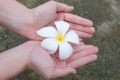 Flores nas mãos Flores bonitas nas mãos da mulher foto de stock royalty free