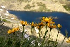 Flores nas montanhas foto de stock