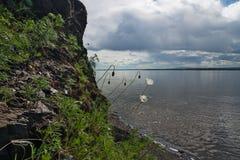 Flores nas rochas Imagem de Stock Royalty Free