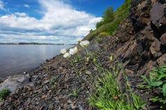 Flores nas rochas Fotos de Stock Royalty Free