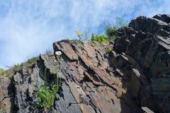 Flores nas rochas Imagem de Stock