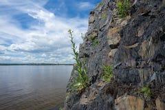 Flores nas rochas Foto de Stock