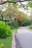 Flores nas ruas e nos parques. Imagens de Stock