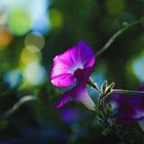 Flores nas sombras Fotografia de Stock Royalty Free