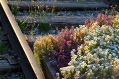 Flores nas trilhas railway Imagens de Stock