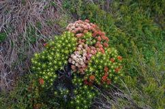 Flores nativas Imagenes de archivo