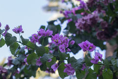 Flores naturais fotografia de stock royalty free