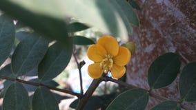 Flores naturais bonitas Fotografia de Stock