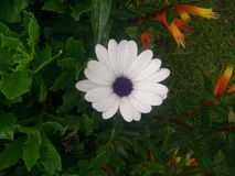 Flores naturais Sri Lanka da manhã bonita fotos de stock royalty free