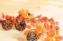 Flores naturales del cono del pino con las hojas anaranjadas Imagen de archivo libre de regalías