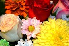Flores naturales - sensaciones sinceras Amor - como él IS-IS siempre hermoso Fotos de archivo libres de regalías