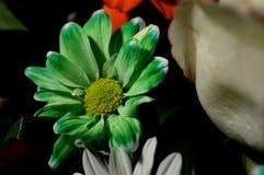 Flores naturales - sensaciones sinceras Amor - como él IS-IS siempre hermoso Fotografía de archivo libre de regalías