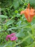 Flores, naturaleza, belleza, verano, multa Foto de archivo