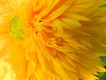 Flores, naturaleza, jardín, campo, al aire libre, ¿Ð°ÑƒÐº, pétalos de la araña, belleza, hermoso, blanca, amarillo de Ð imagenes de archivo