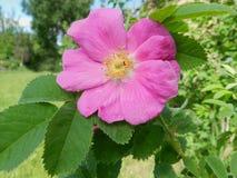 Flores, naturaleza, jardín, campo, al aire libre, pétalos, belleza, hermoso, blanca, amarillo fotos de archivo libres de regalías