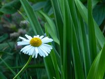 Flores, naturaleza, jardín, campo, al aire libre, pétalos, belleza, hermoso, blanca, amarillo imagen de archivo libre de regalías