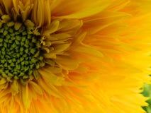 Flores, naturaleza, jardín, campo, al aire libre, pétalos, belleza, hermoso, blanca, amarillo imagenes de archivo