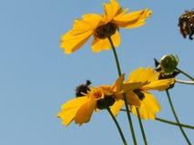 Flores, naturaleza, jardín, campo, al aire libre, pétalos, belleza, hermoso, blanca, amarillo fotografía de archivo libre de regalías