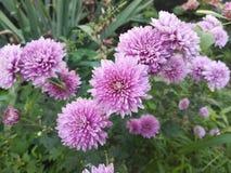 Flores, natureza, flor cor-de-rosa Foto de Stock Royalty Free