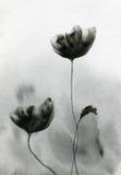 Flores negras y blancas Fotos de archivo libres de regalías