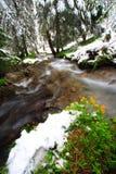 Flores, nieve y río Imagen de archivo