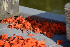 Flores no assoalho Imagem de Stock