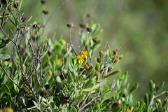 Flores no assoalho Imagem de Stock Royalty Free