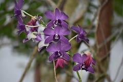 Flores no assoalho Fotos de Stock Royalty Free