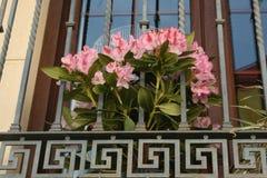 Flores no balcão fotos de stock royalty free