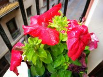 Flores no balc?o fotografia de stock royalty free