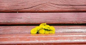 Flores no banco Imagem de Stock