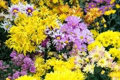 Flores no berçário Fotos de Stock Royalty Free