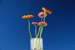 Flores no céu Imagem de Stock