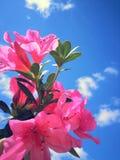 Flores no céu Foto de Stock Royalty Free