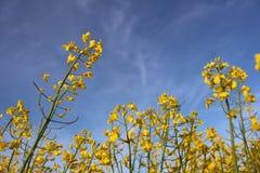 Flores no campo fotografia de stock royalty free