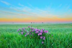 Flores no campo da manhã Fotos de Stock Royalty Free