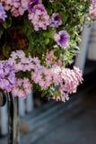 Flores no canteiro de flores como elementos do projeto da paisagem Imagens de Stock Royalty Free