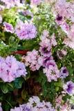 Flores no canteiro de flores como elementos do projeto da paisagem Fotos de Stock