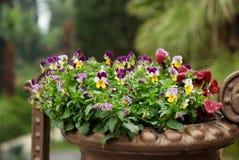 Flores no canteiro de flores Foto de Stock