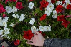 Flores no canteiro de flores imagens de stock royalty free