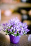 Flores no contador fotografia de stock royalty free