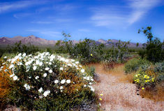 Flores no deserto Imagens de Stock