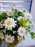 Flores no escritório Imagem de Stock
