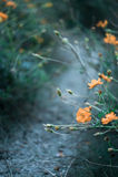 Flores no fim do verão Fotografia de Stock