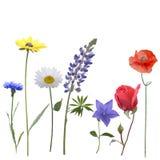 Flores no fundo branco Imagens de Stock